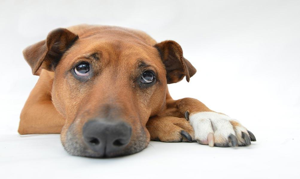 Jak poznat týrání zvířat