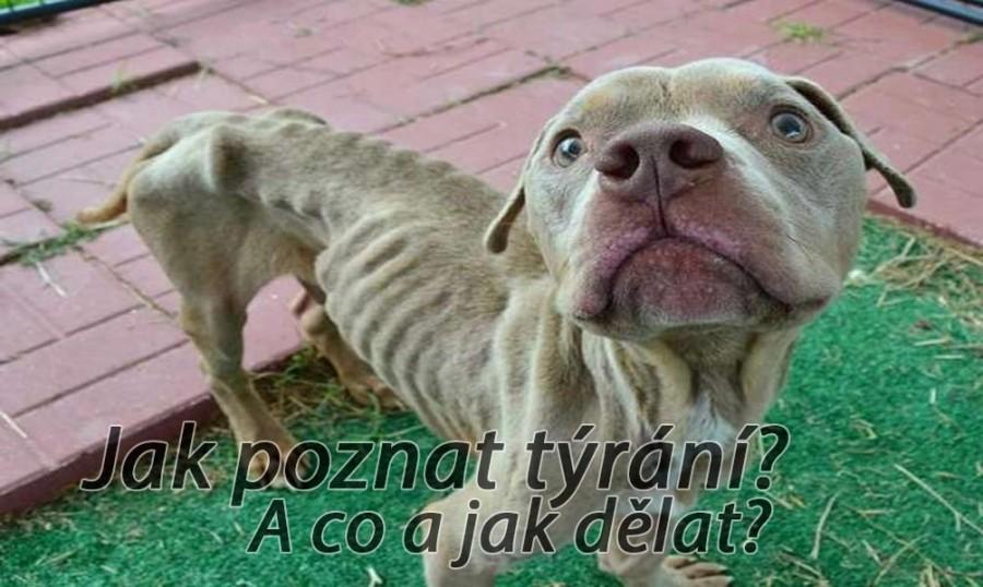 Jak, kdy a kam nahlásit týrání psa?