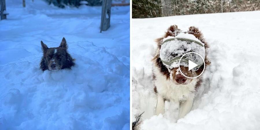 "Tenhle pes je nadšený z jeho nových ""sněžných brýlí"""