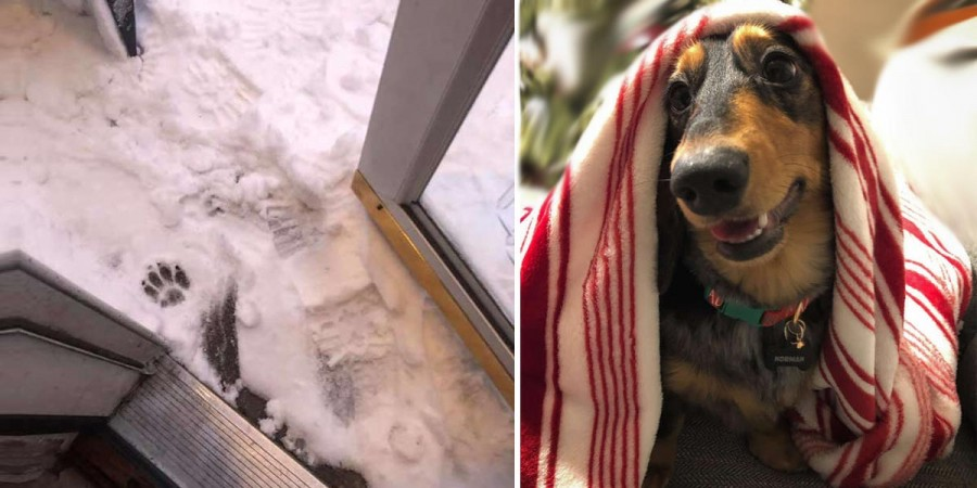 Tenhle pes odmítá dát více jak jednu tlapku ven na sníh. Poradili jsme, jak na to.