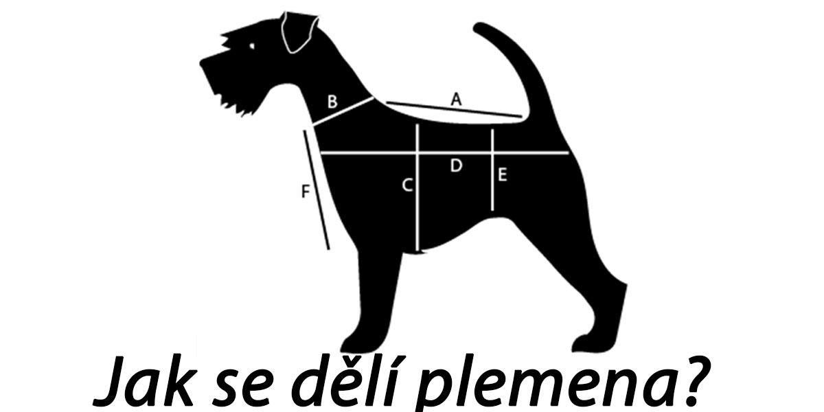 Jak se dělí psí plemena podle výšky v kohoutku?