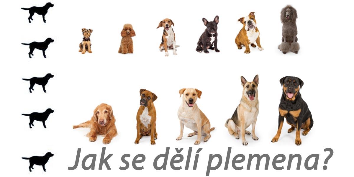 Jak se dělí psí plemena podle váhy?