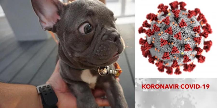 Koronavirus u psů a koček: Mohu nakazit svého psa?