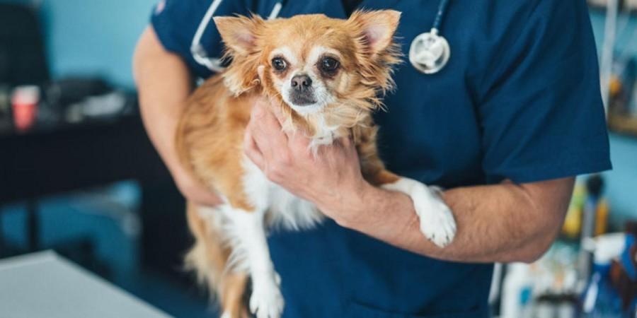 První pes na světě, který se nakazil novým koronavirem