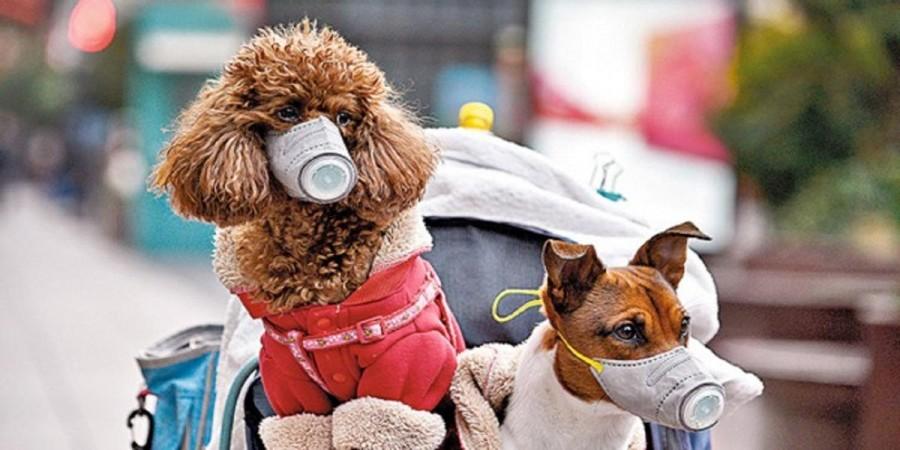 Venčit můžete jen pracovní psy. Roušky jsou dobrá prevence, nevěřte desinformacím