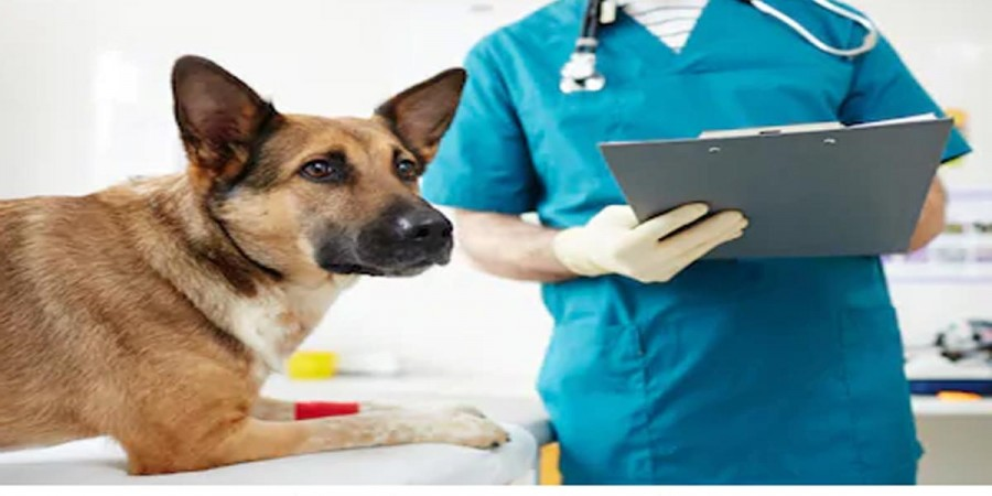 První pes pozitivní na koronavirus zemřel. V Hongkongu evidují druhého psa pozitivního na Covid-19