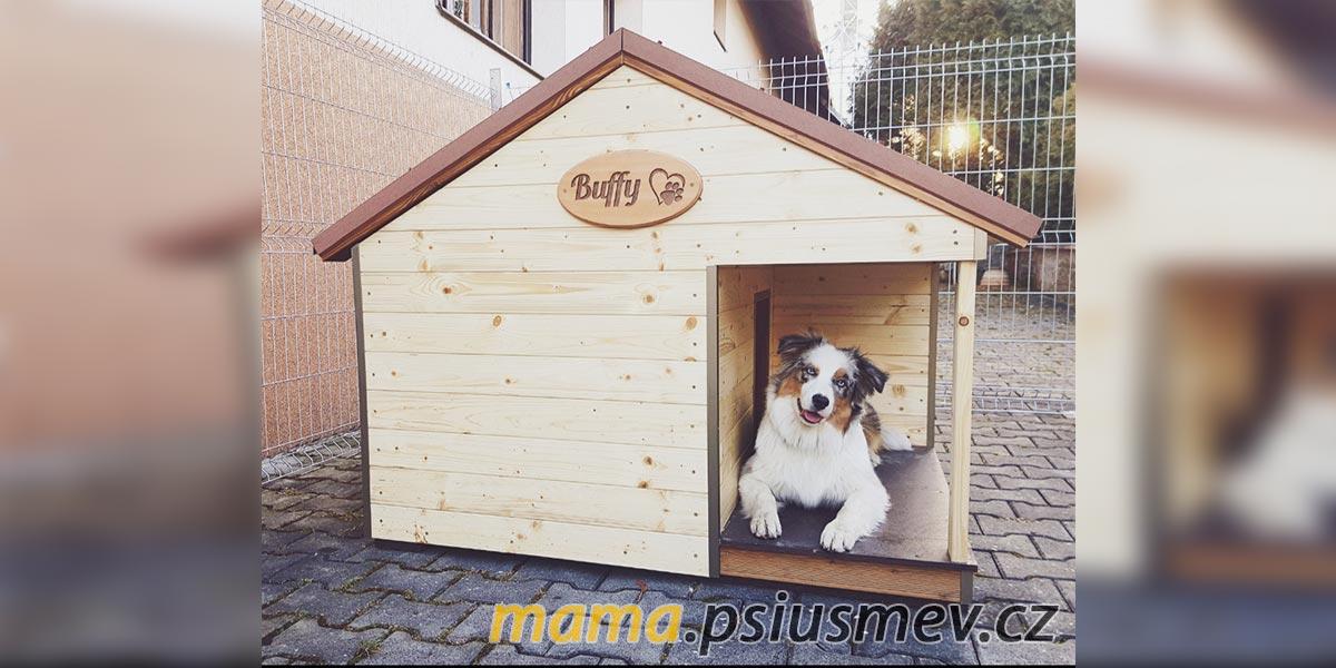 Co dělat, když se pes nudí? #NervyStranou