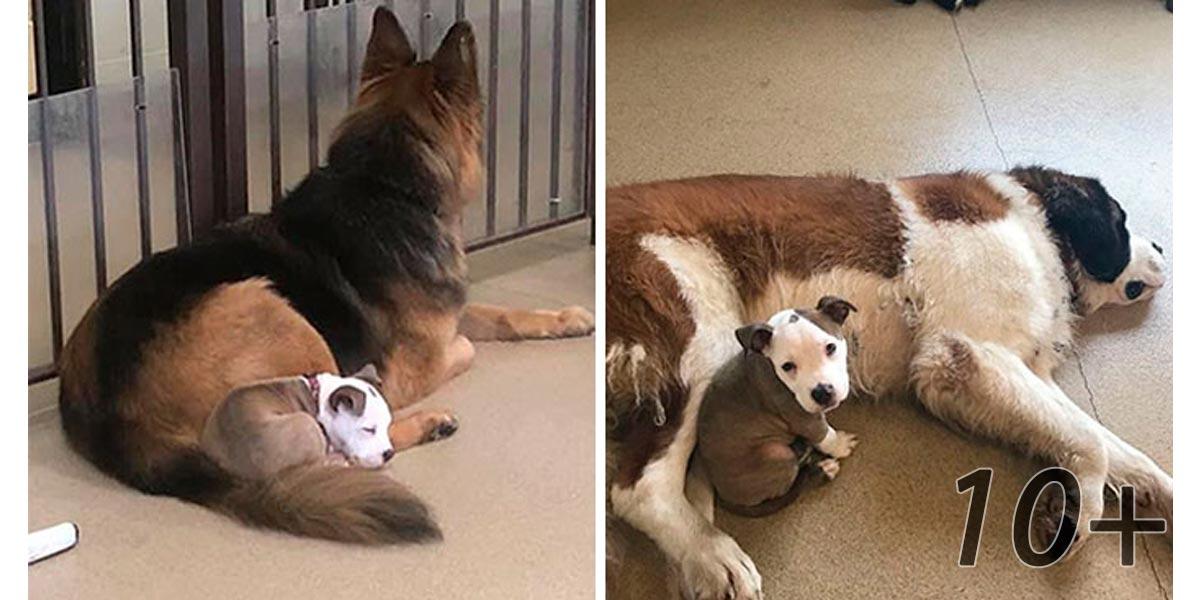 Pes hledá velké a měkké kamarády, aby se cítil spokojeně