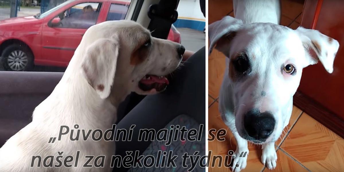 Vrátil se do auta z lékárny, kde našel opuštěného psa. A udělal tu jedinou správnou věc