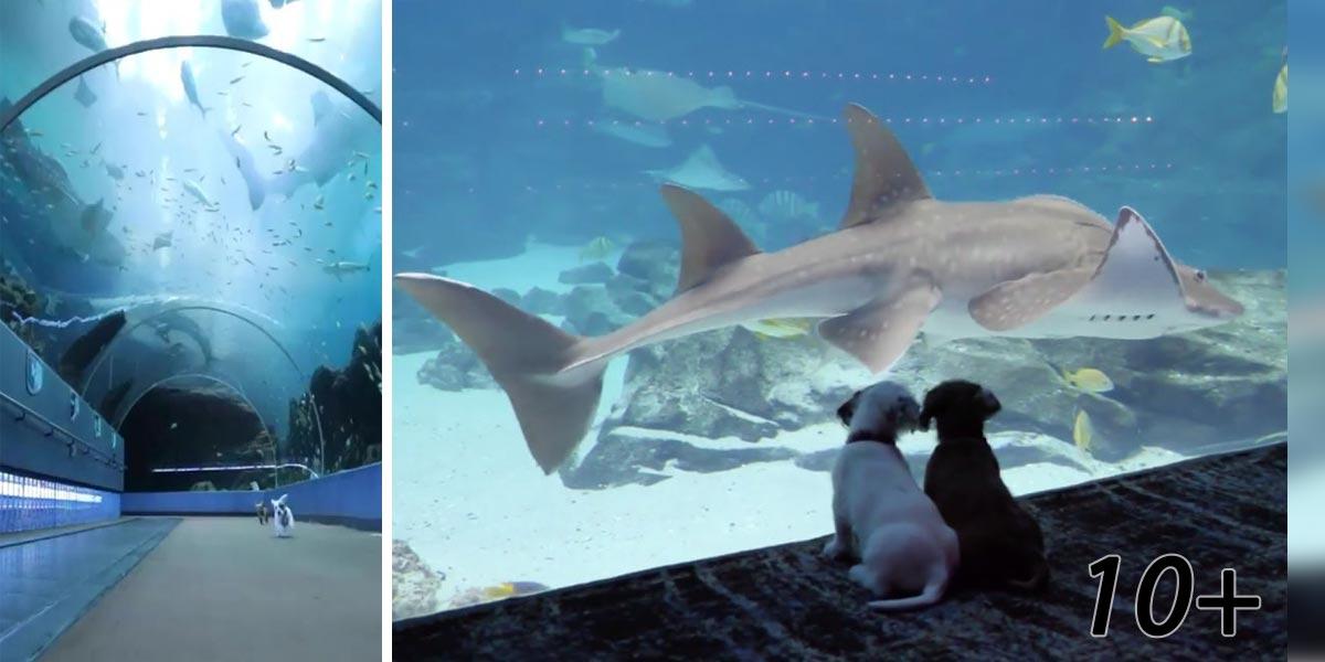 Do zavřeného akvária pustili štěňata a koťata. Podívejte se s nimi na virtuální prohlídku
