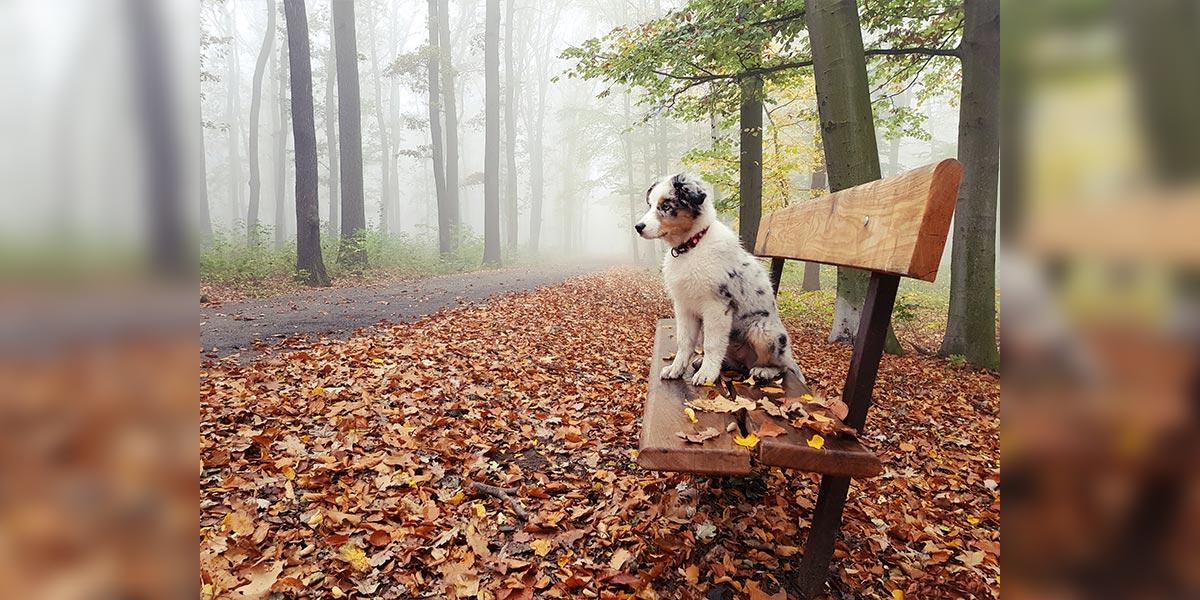 Jak na klíšťata u psů?