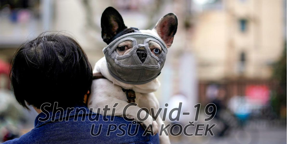 Nové informace vlivu COVID-19 na psy a kočky