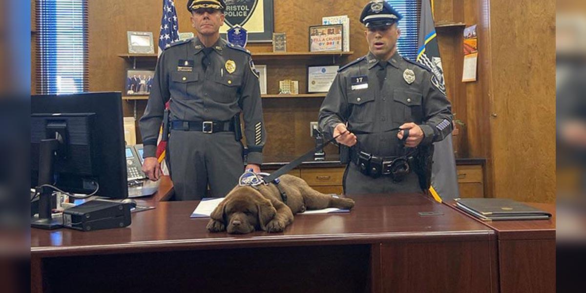 Tohle je Brody, nový terapeutický policejní pes, který právě složil vlastní ceremoniální přísahu