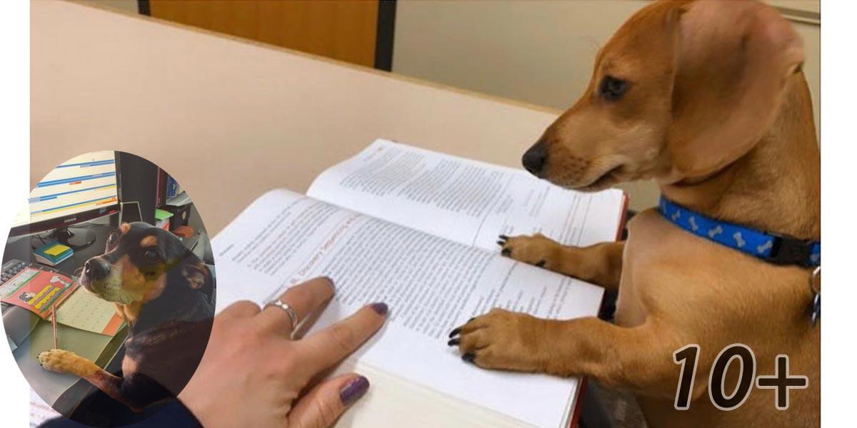 Profesorka vyzvala studenty, aby jí ukázali, jak doma pilně studují. 30 z nich odeslali jako odpověď fotografii svého psa