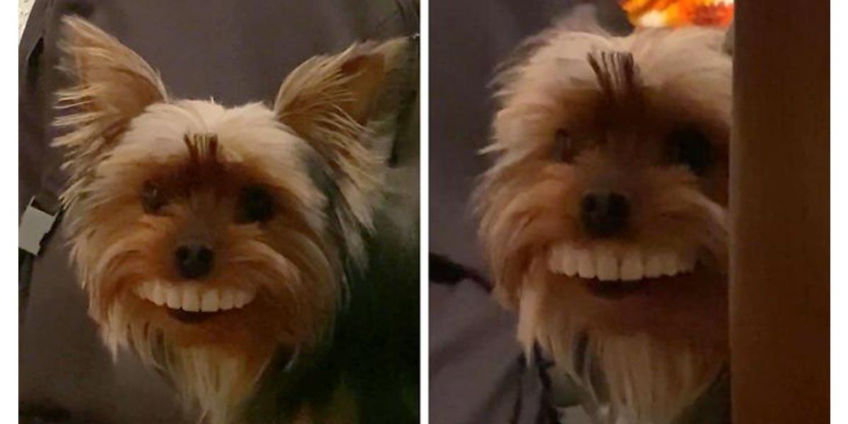 Po návštěvě u zubaře muž na video zachytil, co si jeho pes odnesl jako dárek...