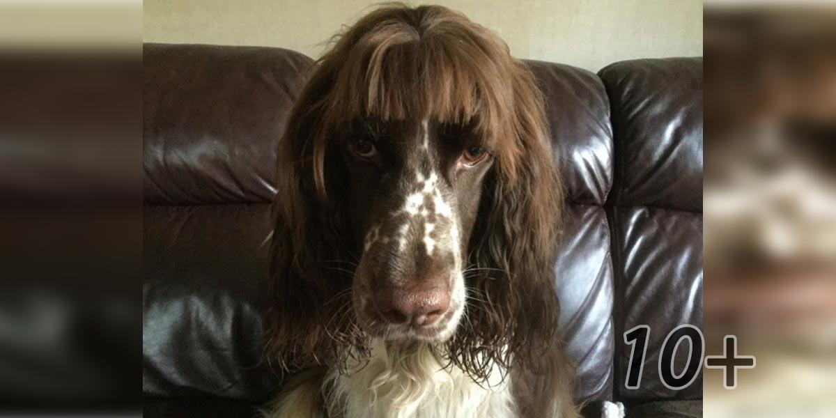 10+ vašich pokusů o vlastní stříhání psa. Nyní už každý chápe, proč je lepší platit profesionálům...