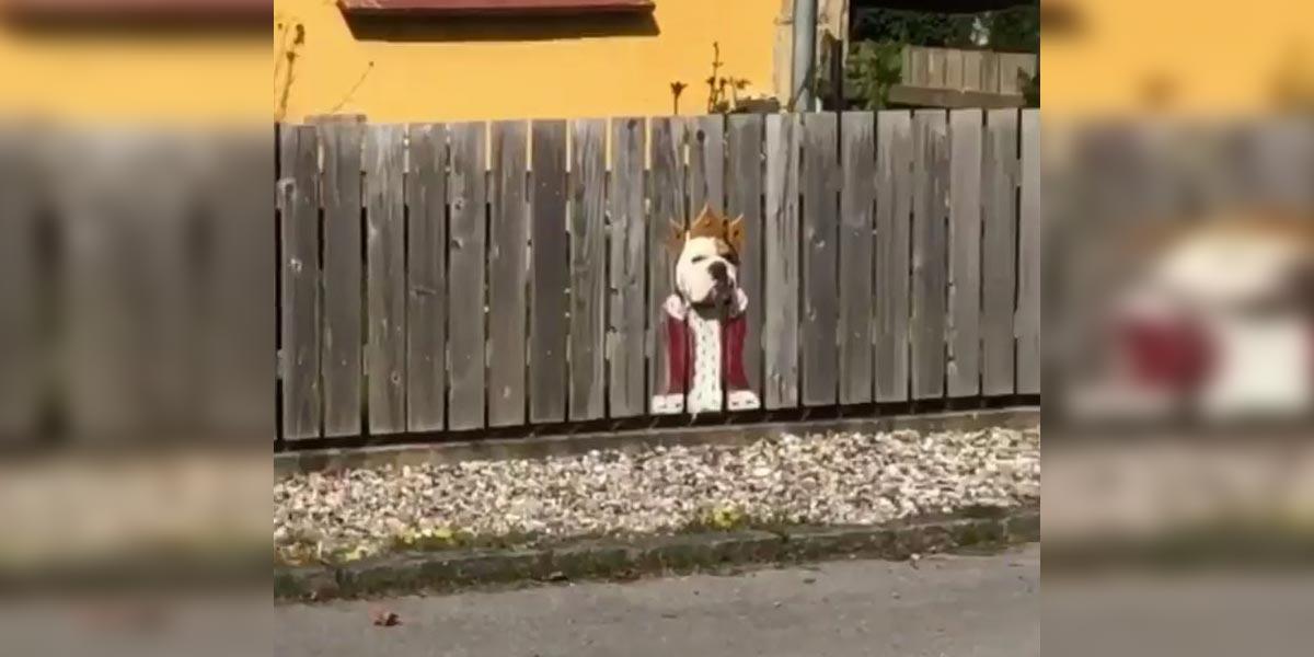 Sousedův pes miluje pozorování skrz plot, tak jsme mu vyrobili originální okénko...