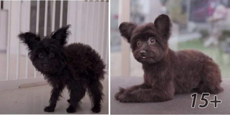 15+ psů po karanténě: Nový sestřihy, po kterých byste je nepoznali