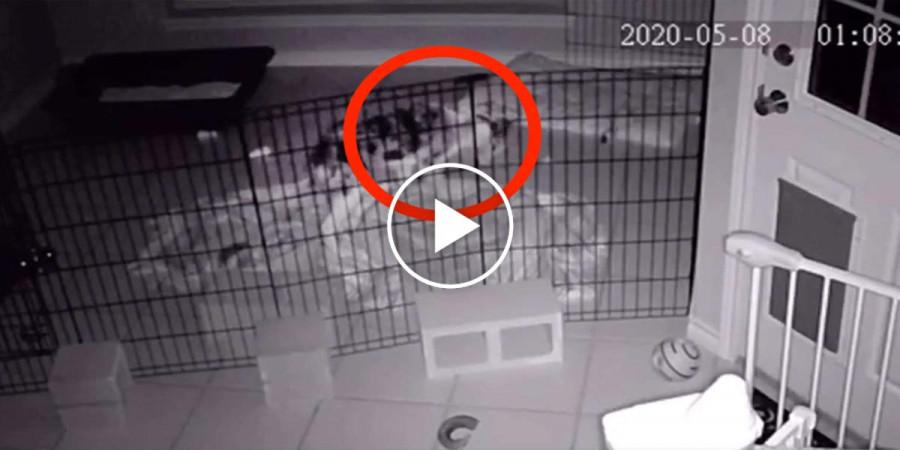 """Štěně vyděsilo celý dům, když ve 3h ráno objevilo ve svém pelechu """"strašidlo"""""""