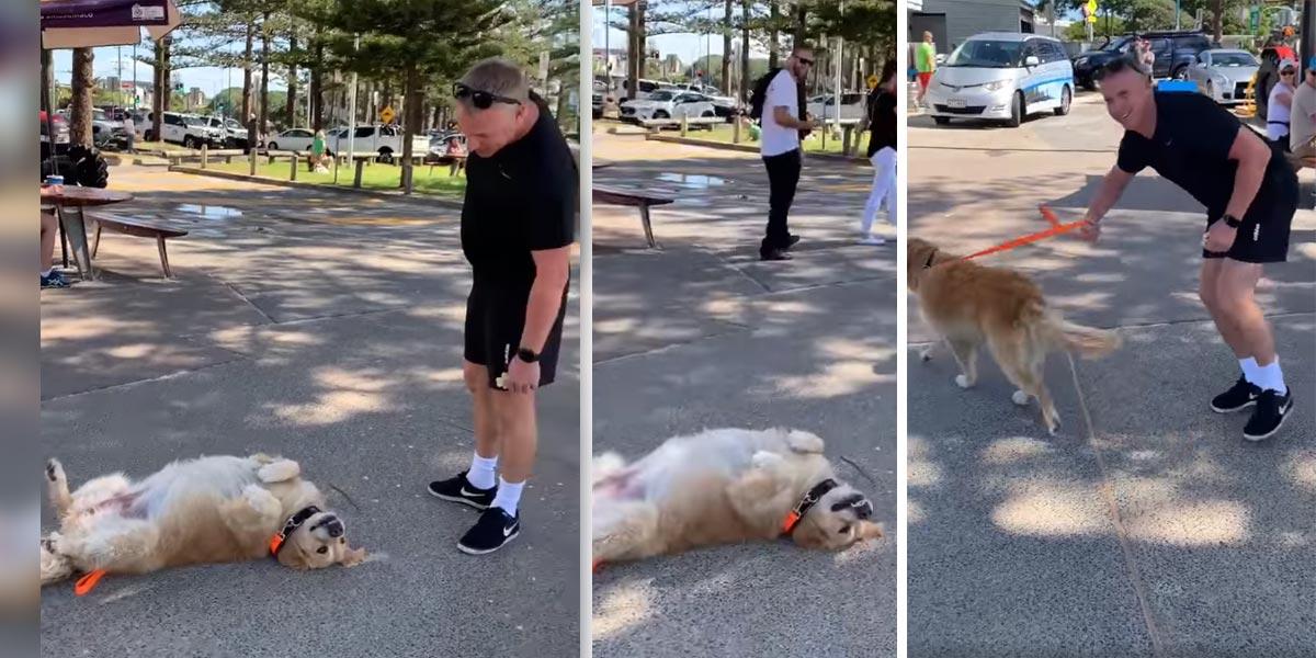 Chytrák hraje mrtvého, aby si v parku mohl hrát déle...