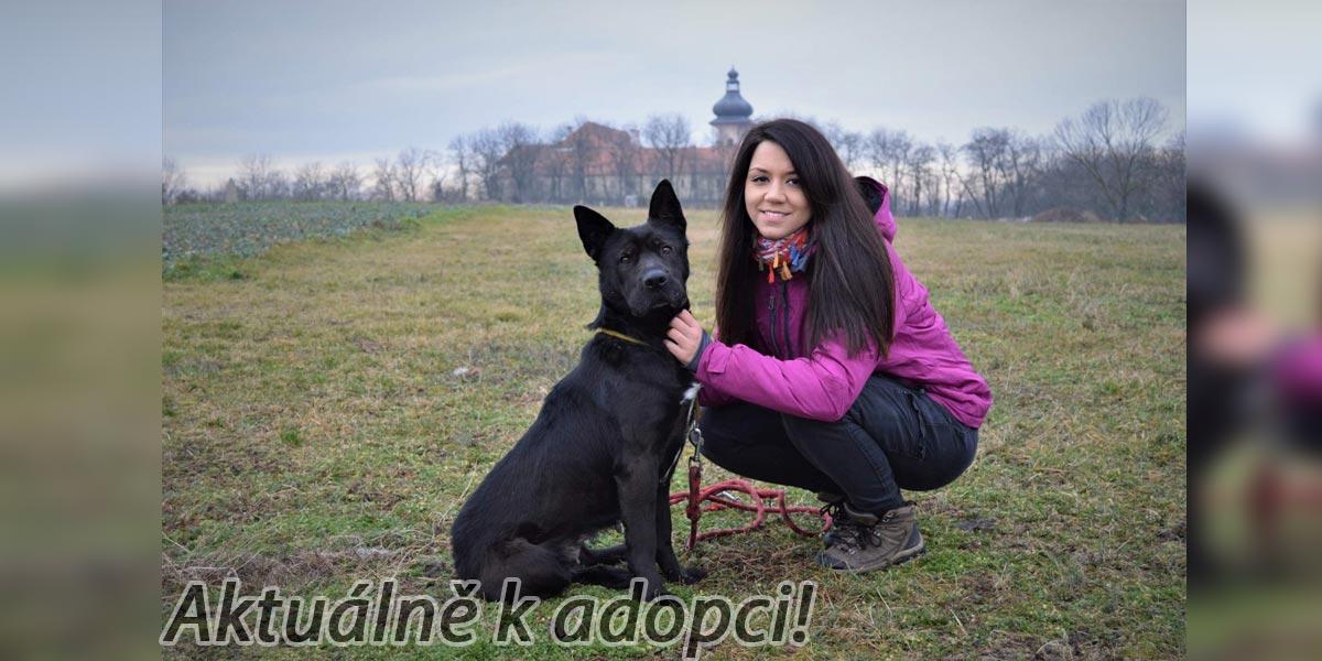 Fenka Nera v útulku vyhlíží novou rodinu
