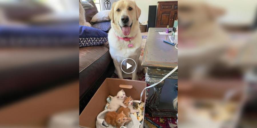 Velká fenka potkala malá koťata. A ihned je všechny adoptovala...
