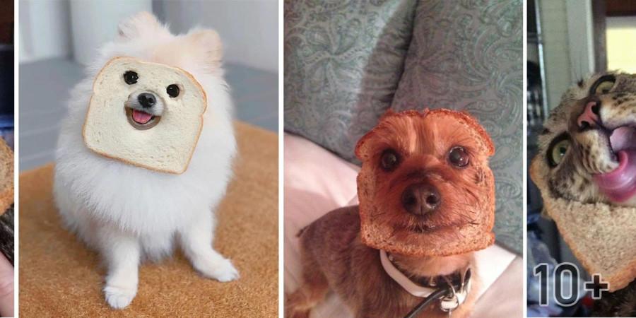 Internetem se šíří nová psí móda. Co na to říkáte?