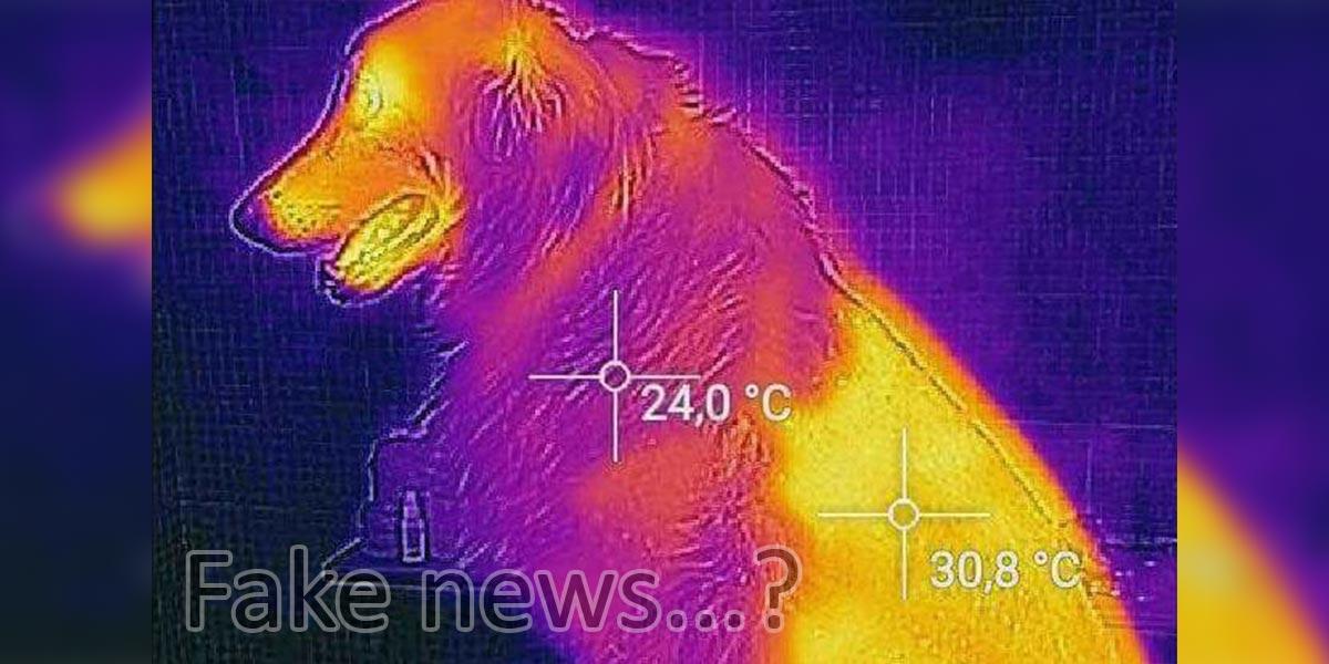 Ostříháním psa snížíte jeho možnost zchlazení o 20 %. Je to pravda?