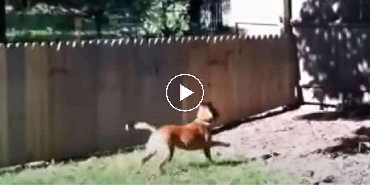 Pes mu utíkal k sousedům, a tak postavil plot. Všechno ale skončilo jinak, než očekával...