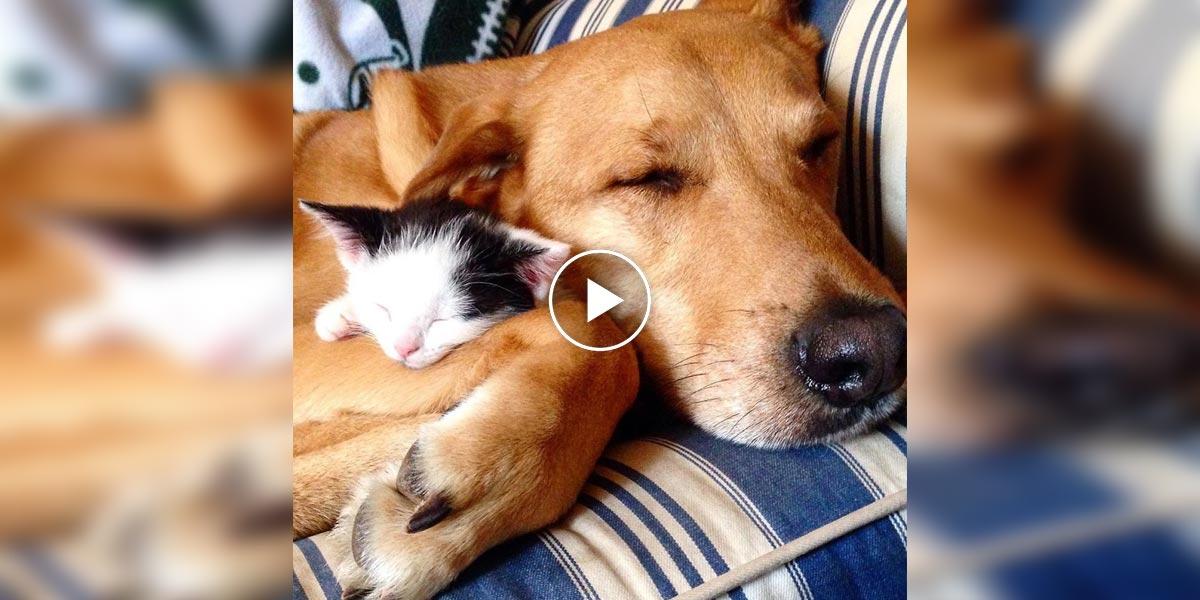 Pes Ruffy se stará o všechny kočky v tomto Azylu pro kočky