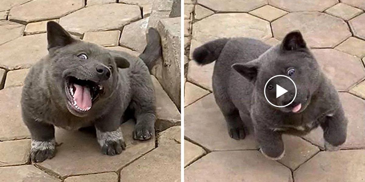 Lidé říkají, že tohle štěně je hybridem kočky a psa. Co si myslíte vy?