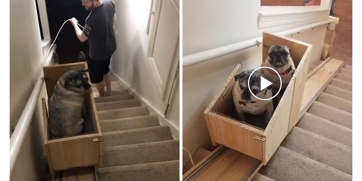 Majitel pro starší psy vyrobil psí výtah. Ohlas je obrovský.