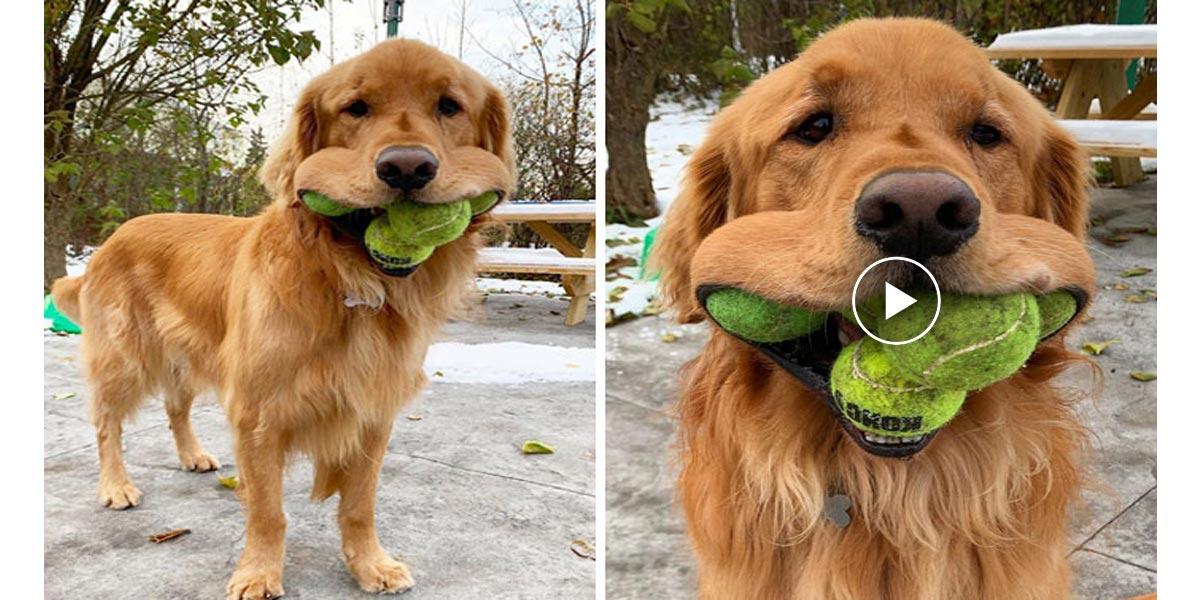 Nový světový rekord! Chce to hodně tréninku, říká jeho psovod.