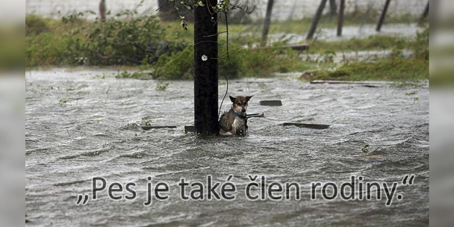 Fotografie psů ze záplav, kteří neměli naději až do té doby než se ukázali stateční lidé