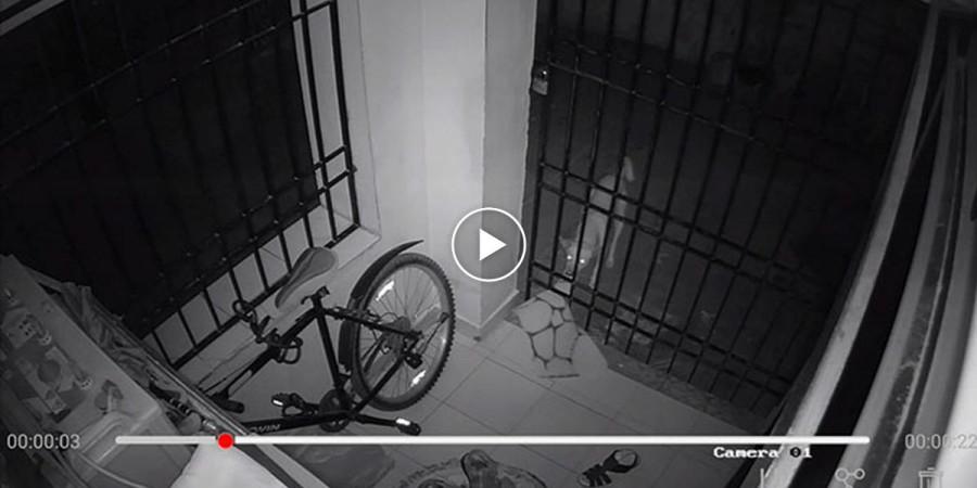 Každou noc se mu ztrácely věci, a tak si pořídil kameru. Zloději byli 3 - psi souseda.