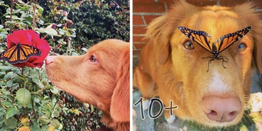 Ohleduplný pes, který vyhledává motýli, aby se s nimi mohl spřátelit