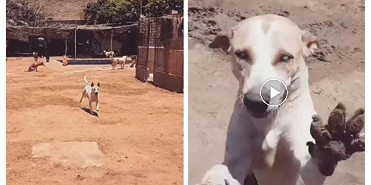 Slepý pes v útulku, který běží jako o závod, když ho zavolá jménem jeho nejlepší přítel