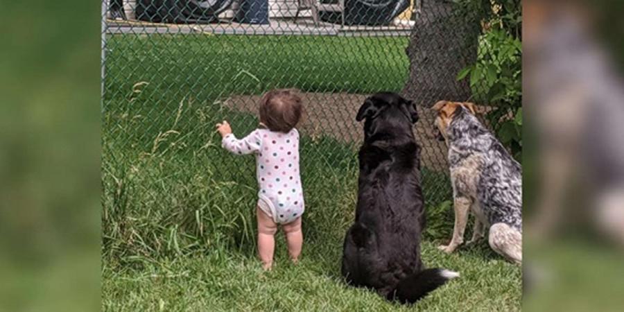 Holčička se každý den připojí ke svým psům, aby od sousedů také dostala něco dobrého