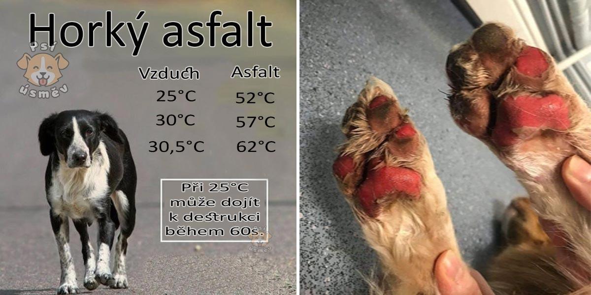 Horký asfalt a psí tlapky: 10 tipů, jak psovi odlehčit
