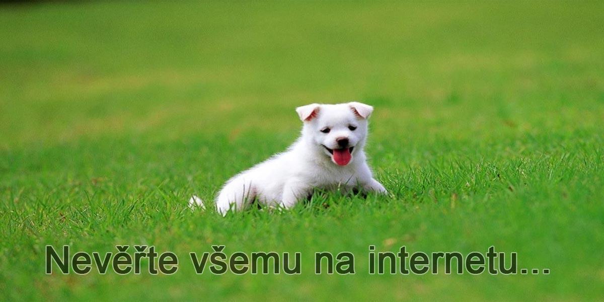 """Pozor na návody """"Jak ochladit v létě psa"""", které se šíří internetem, mohou psovi ublížit"""