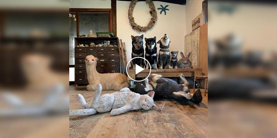 Podívejte se na psí instinkt, jak se chytrý pes snaží splynout s okolím