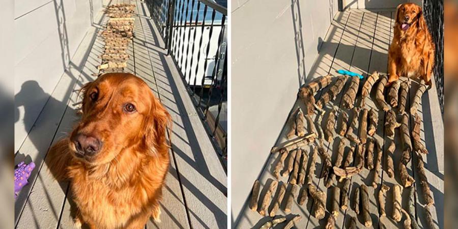 """Tenhle pes dokazuje svému majiteli, jak je hrdý na svou sbírku """"aportovacích věcí"""""""