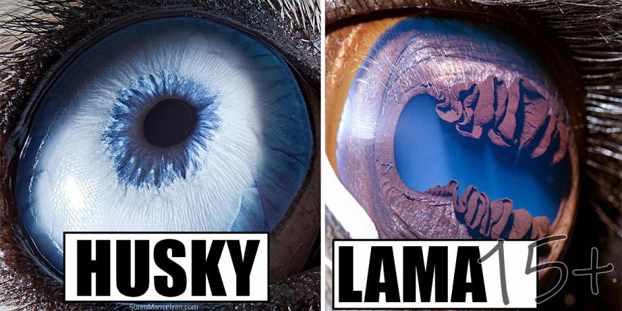 Fotograf dokonale zachytil jedinečnost každého oka (15+ obrázků)