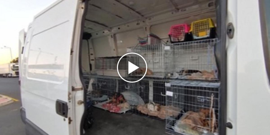 Před Teplicemi SVS objevila dodávku, která pašovala štěňata a koťata do Německa. Množírny jsou stále výnosný business