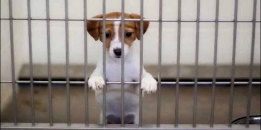 Poslanci odmítli zpřísnění trestu za týrání zvířat. A je to vlastně úplně jedno...