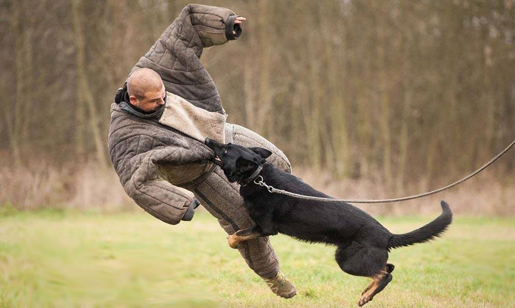 Napadení psa psem