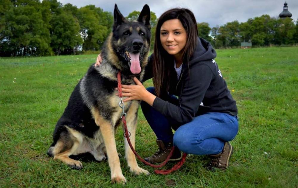 Starší psi k adopci, poslední šance