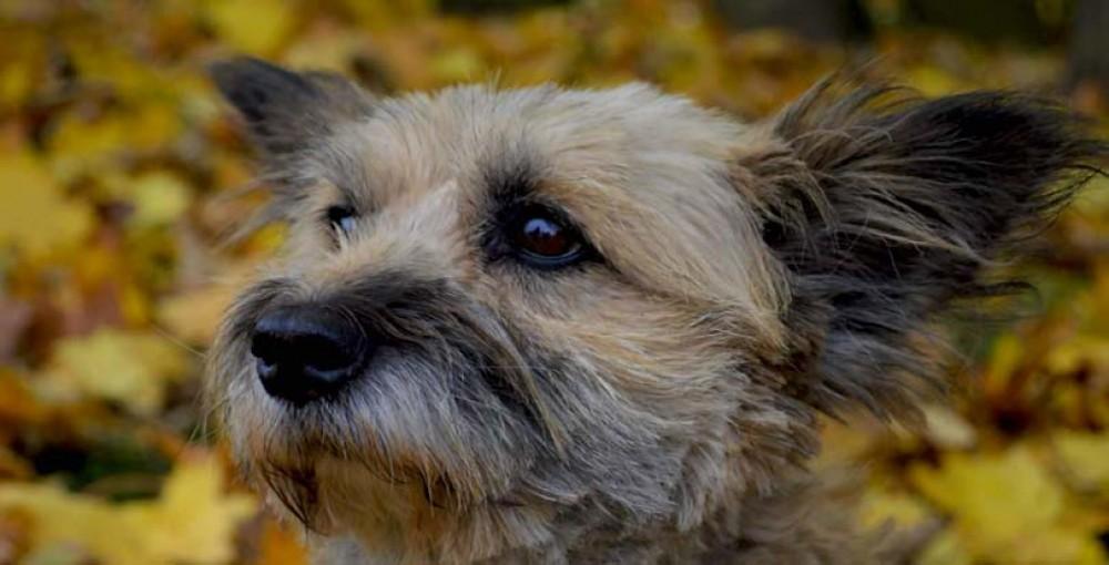 profil psa