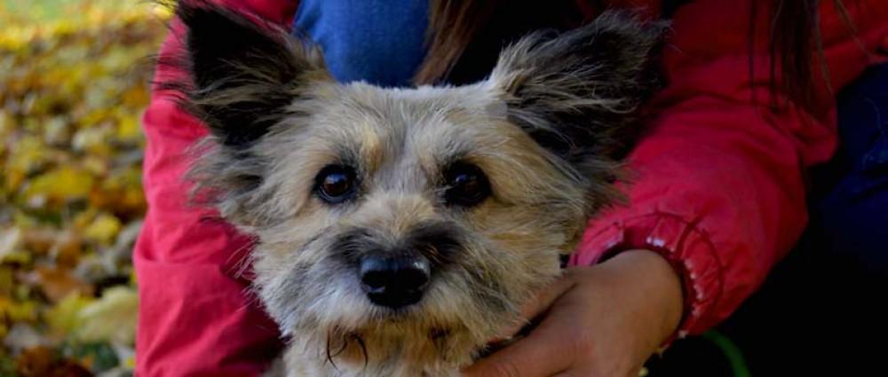 Roztomilé psí oči fenky k adopci