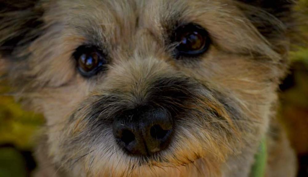 Smutné psí oči